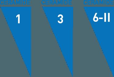 CeraVe ceramide illlustration